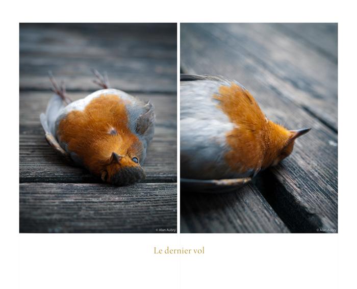 Oiseau mort sur ma terrasse